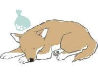 【獣医さんに聞く】  注意が必要なペットの症状 !「口臭がひどい」「運動でぐったり」「よく水を飲む」の背景にある怖い病気とは?