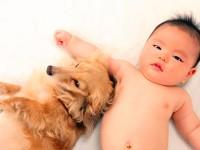 「小児喘息」は動物とのふれあいで対策できる!?