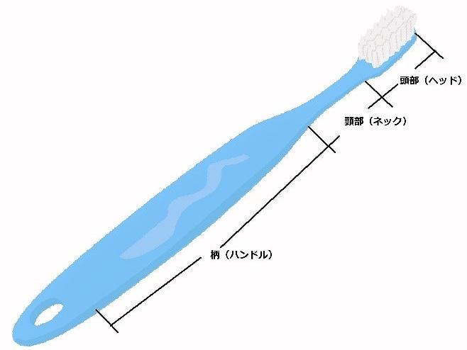 【イラストで紹介】歯ブラシのヘッド、ネック、ハンドル