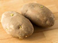 あっ!?ジャガイモから芽が出てる…芽を取れば食べてもOK?