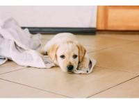 【 ペットの治療体験記 】愛犬の突然の病気、手術とリハビリを共に乗り越え元気な姿に……いざという時の為に必要なこととは?